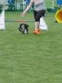 IMG_moosen-10-06-2017-KL-mini004